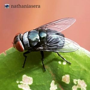 A fly on a leaf